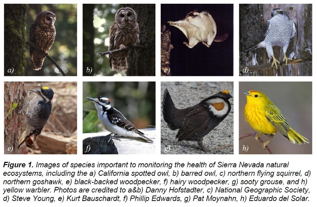 image of different species of birds from the Sierra Nevada region.
