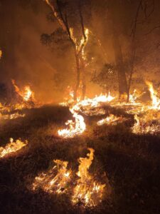 Image of trees and grass on fire at night.